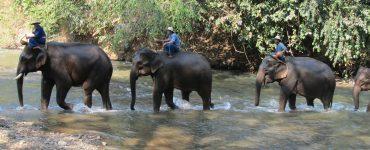 תאילנד פאי