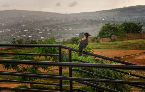 רואנדה מזג האוויר